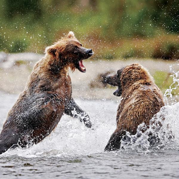 Secrets of Wildlife Photographers