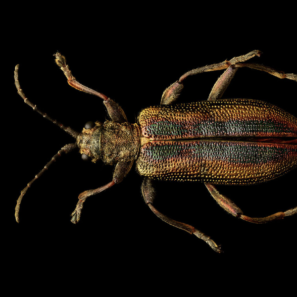 Beautiful images show bugs in a whole new light